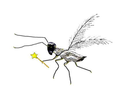 Fairy fly | lizbrownlee - poet