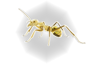 ant plastic wrap