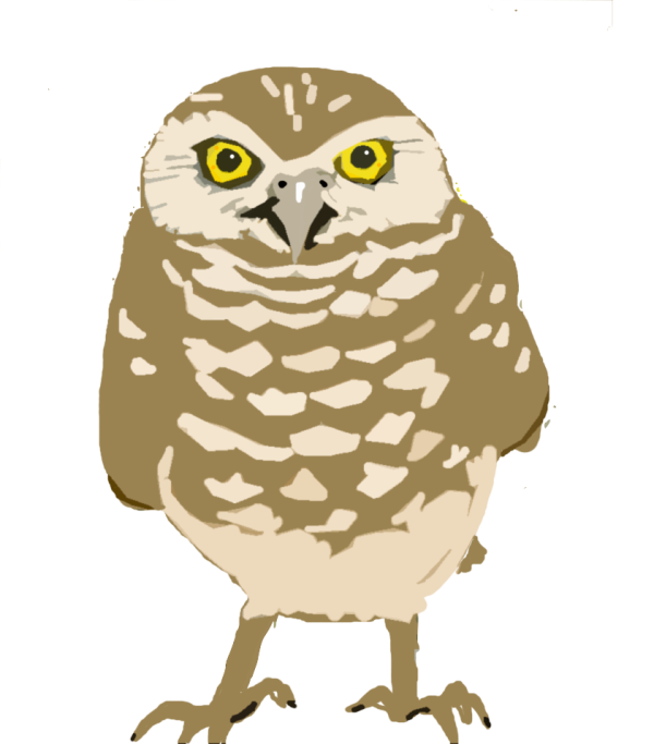 burrowing-owl copy