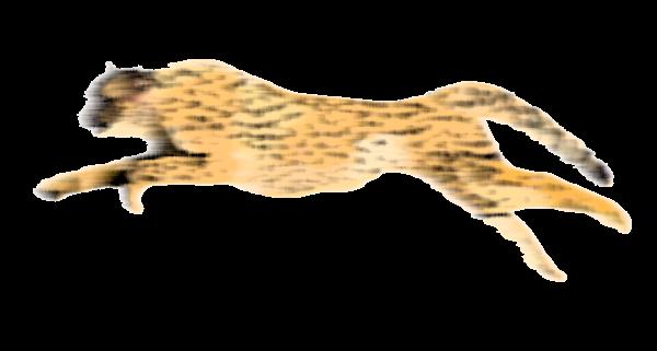 cheetah running png