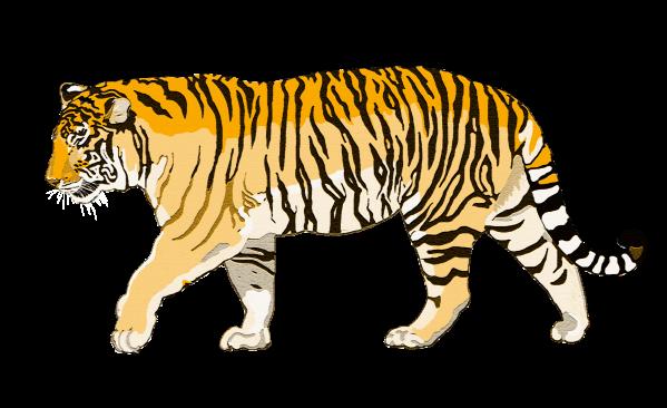 crack tiger best