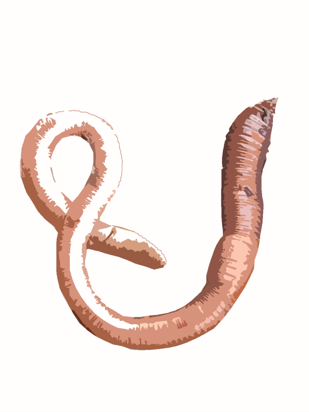 how to grow earthworms at home