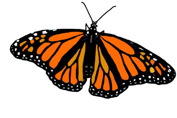 Monarch transTHE