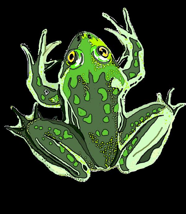 Paradox frog 1