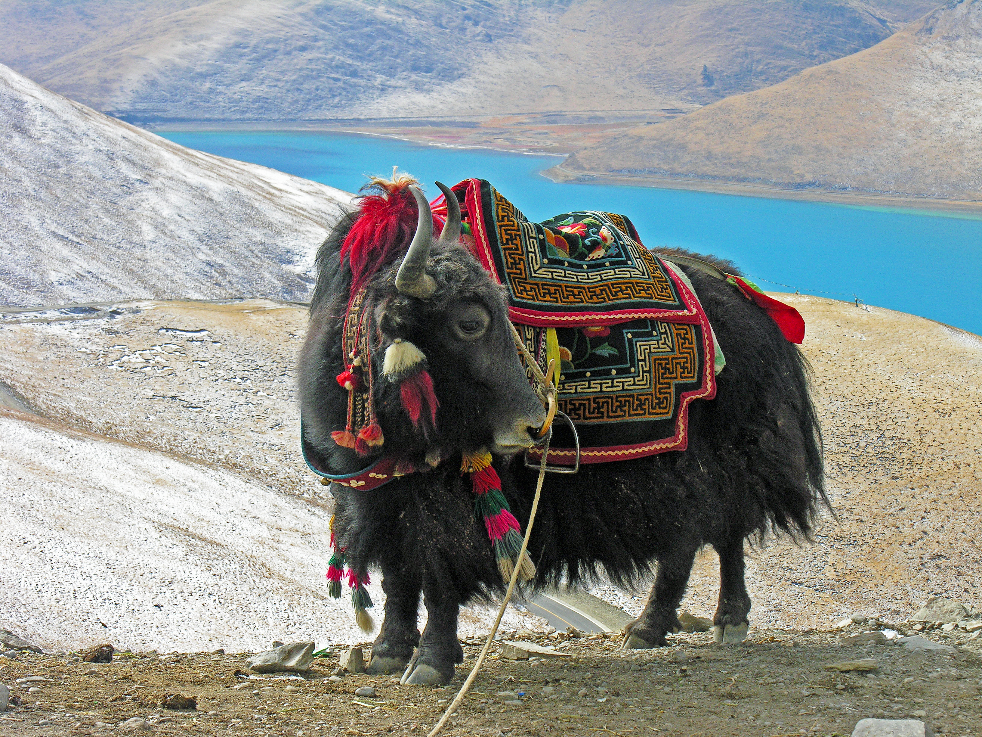 Image Of A Yak: Lizbrownlee - Poet