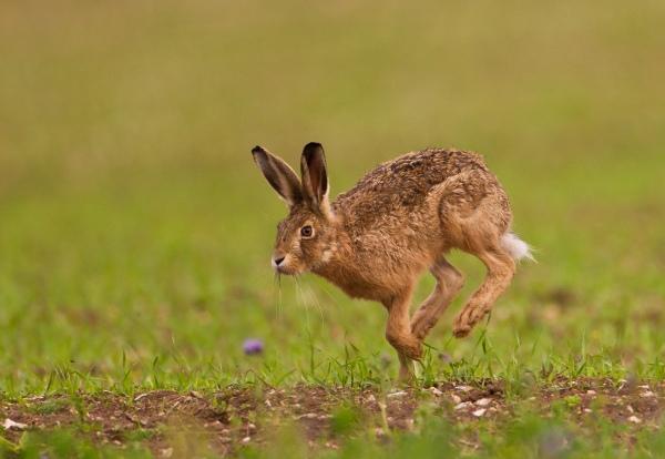 hare allan drewitt natural england