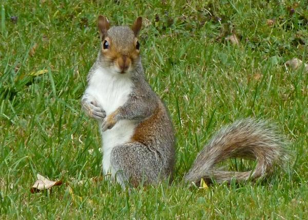 Squirrel Tim Green