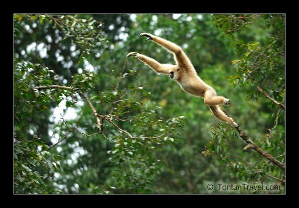 Tontan travel flikr gibbon