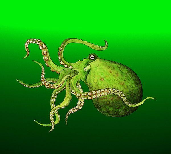 Dru's octopus for blog